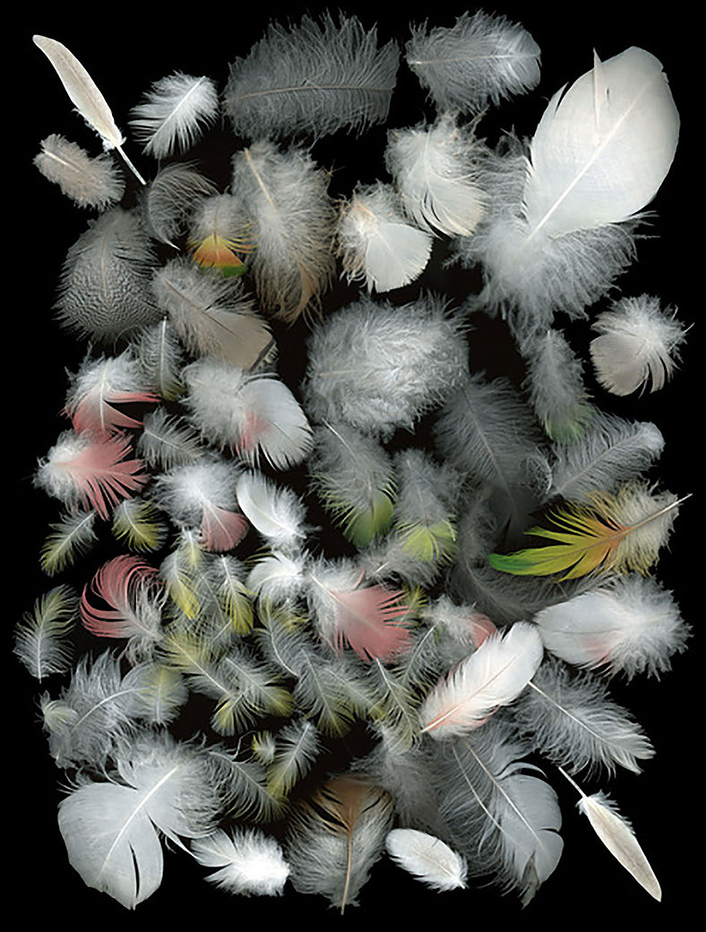 Feathers layed out against a black background. They are mostly white, with some pink and green ones.
